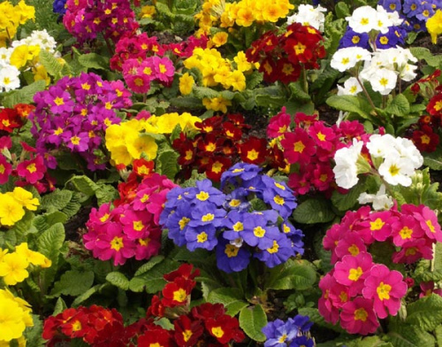 colores-flores