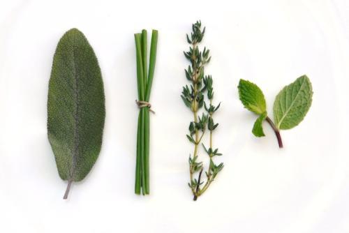cuidados de las hierbas aromaticas y condimentarias tipos Cuidados de las Hierbas aromáticas y condimentarias