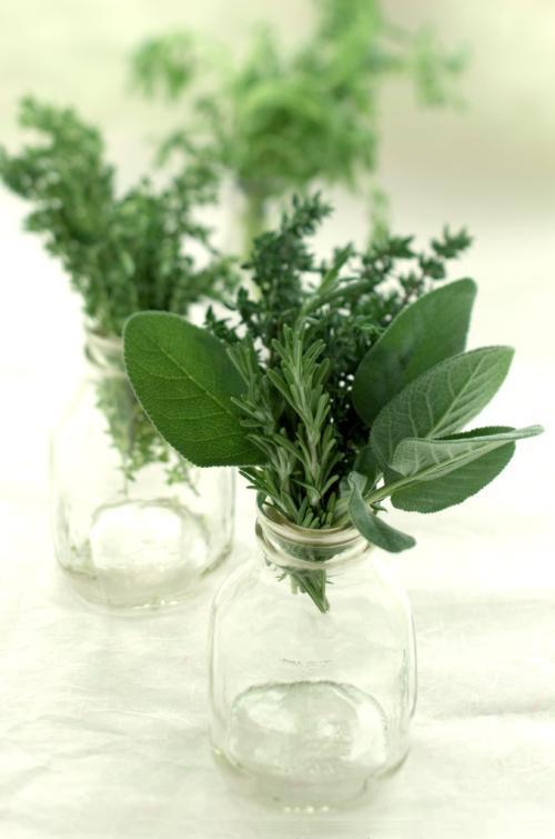 cuidados de las hierbas aromaticas y condimentarias Cuidados de las Hierbas aromáticas y condimentarias