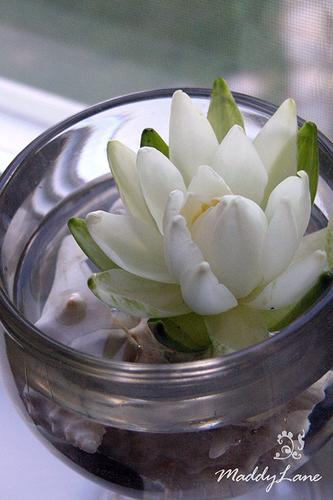jazmin Cómo conservar frescas las Flores cortadas