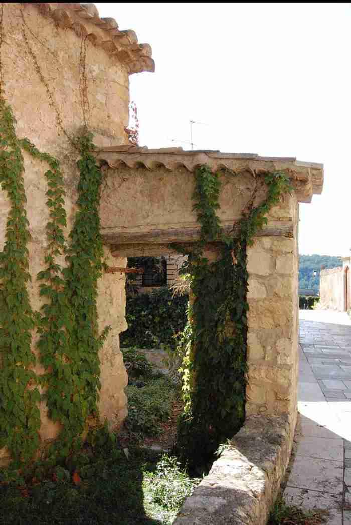 plantas trepadoras muro Plantas Trepadoras